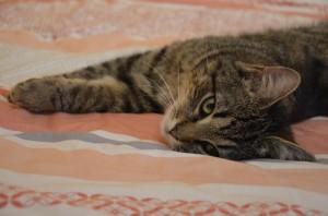 cat-1192922_960_720